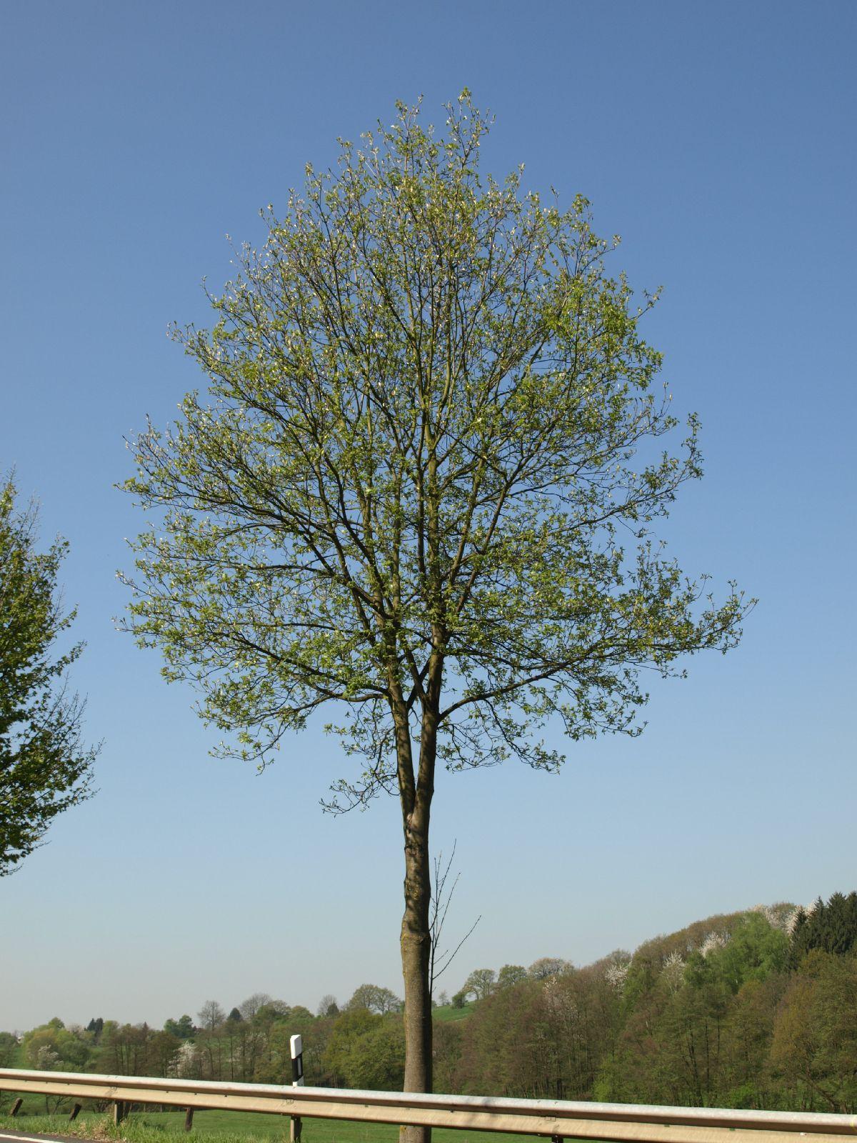 Plants-Trees_Photo_Texture_B_P4212494