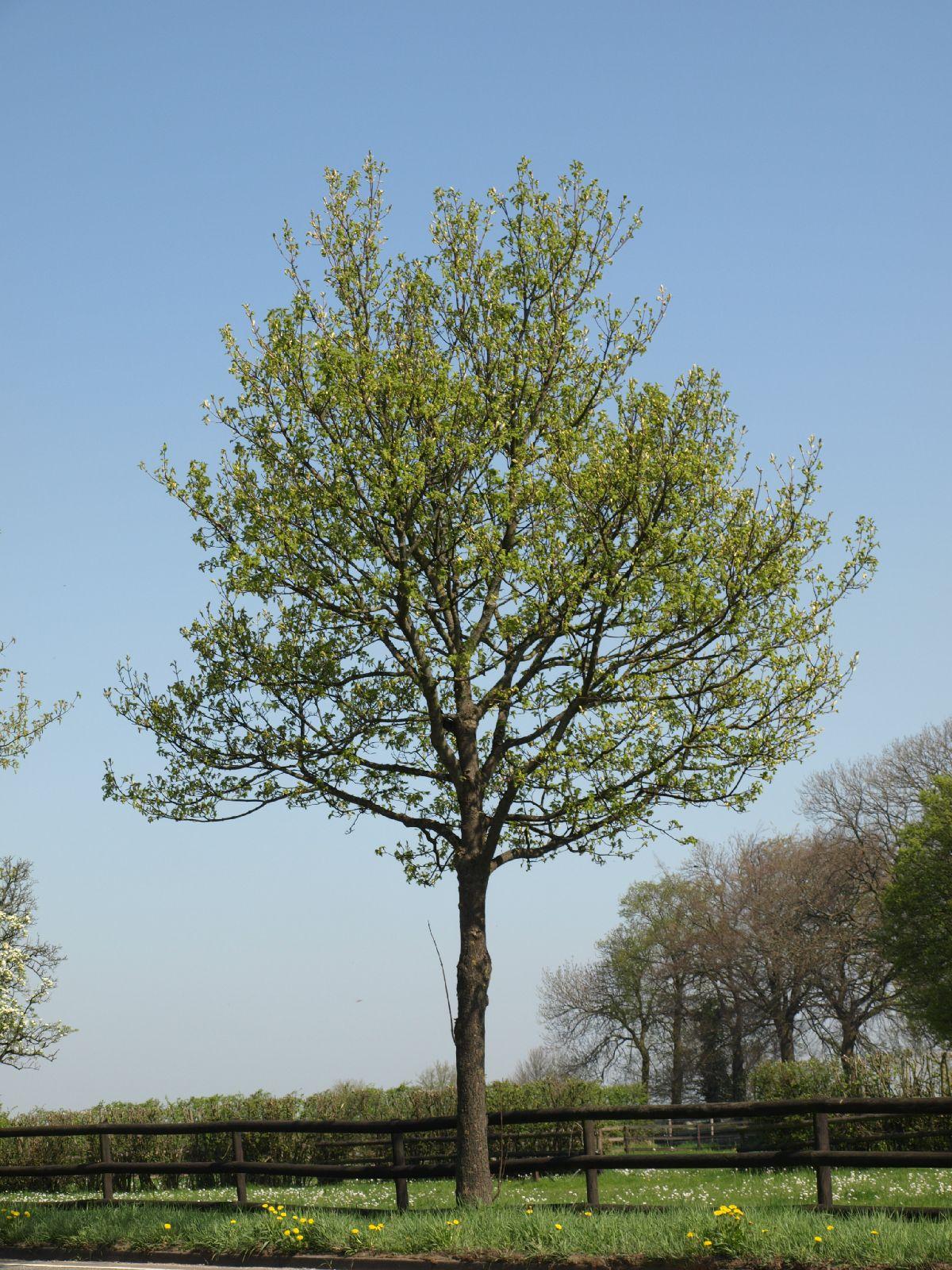 Plants-Trees_Photo_Texture_B_P4212509