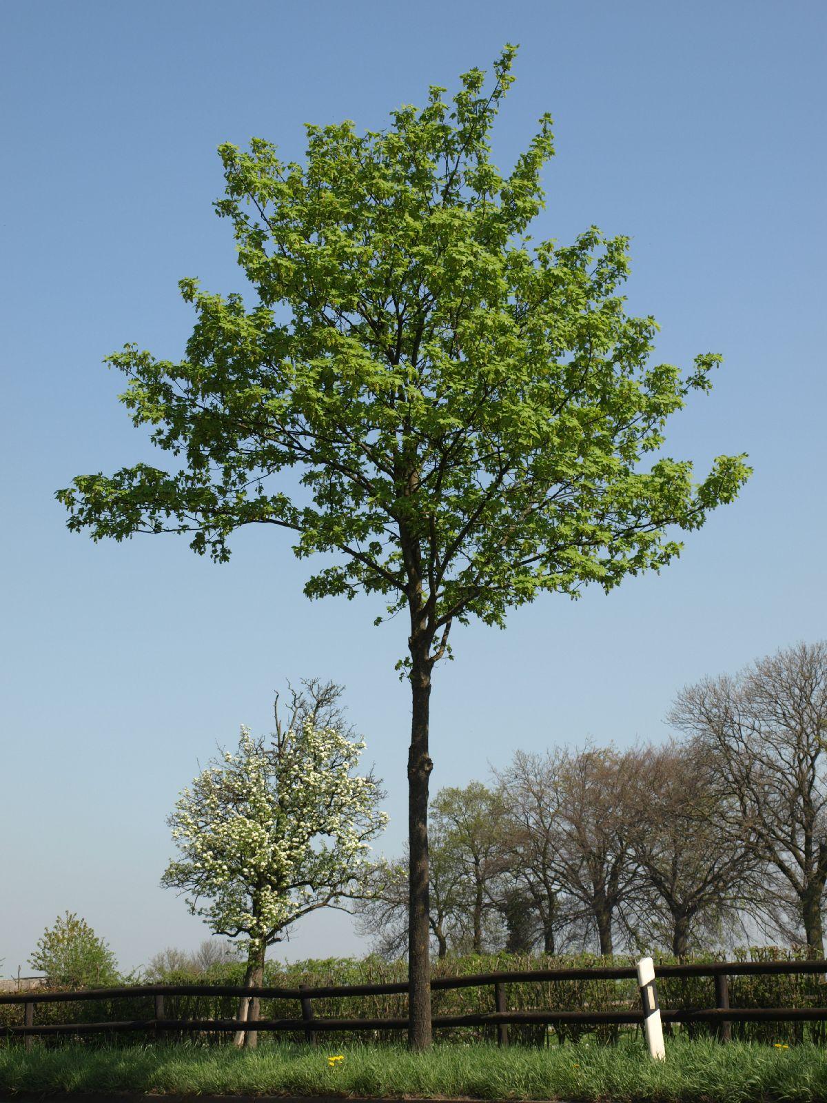 Plants-Trees_Photo_Texture_B_P4212511