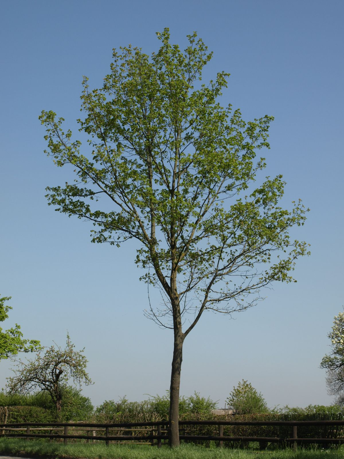 Plants-Trees_Photo_Texture_B_P4212513