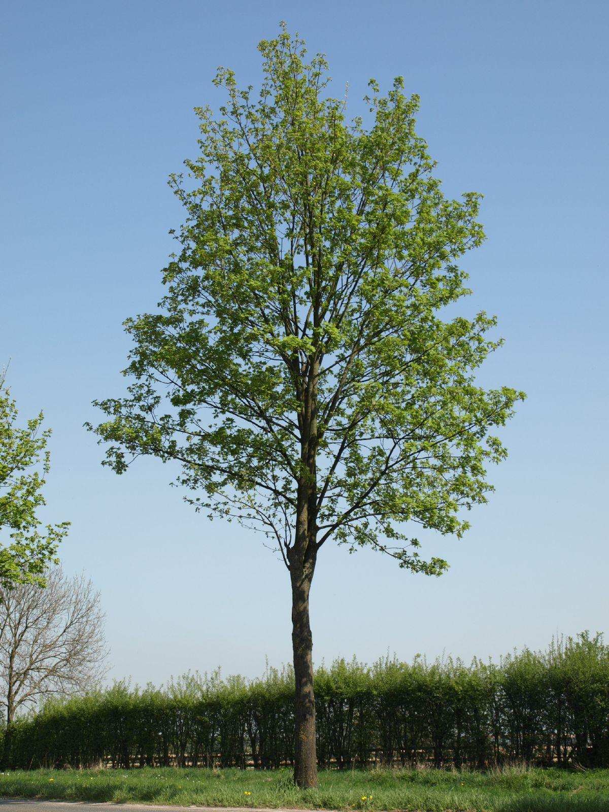 Plants-Trees_Photo_Texture_B_P4212516