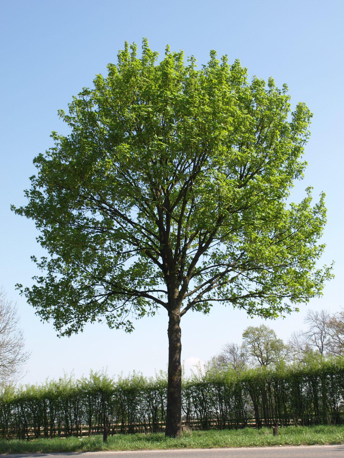 Plants-Trees_Photo_Texture_B_P4212518