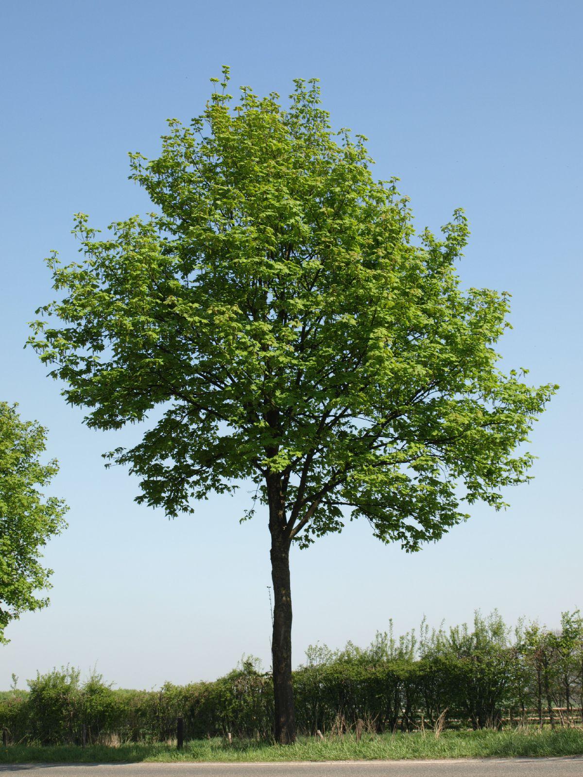 Plants-Trees_Photo_Texture_B_P4212520