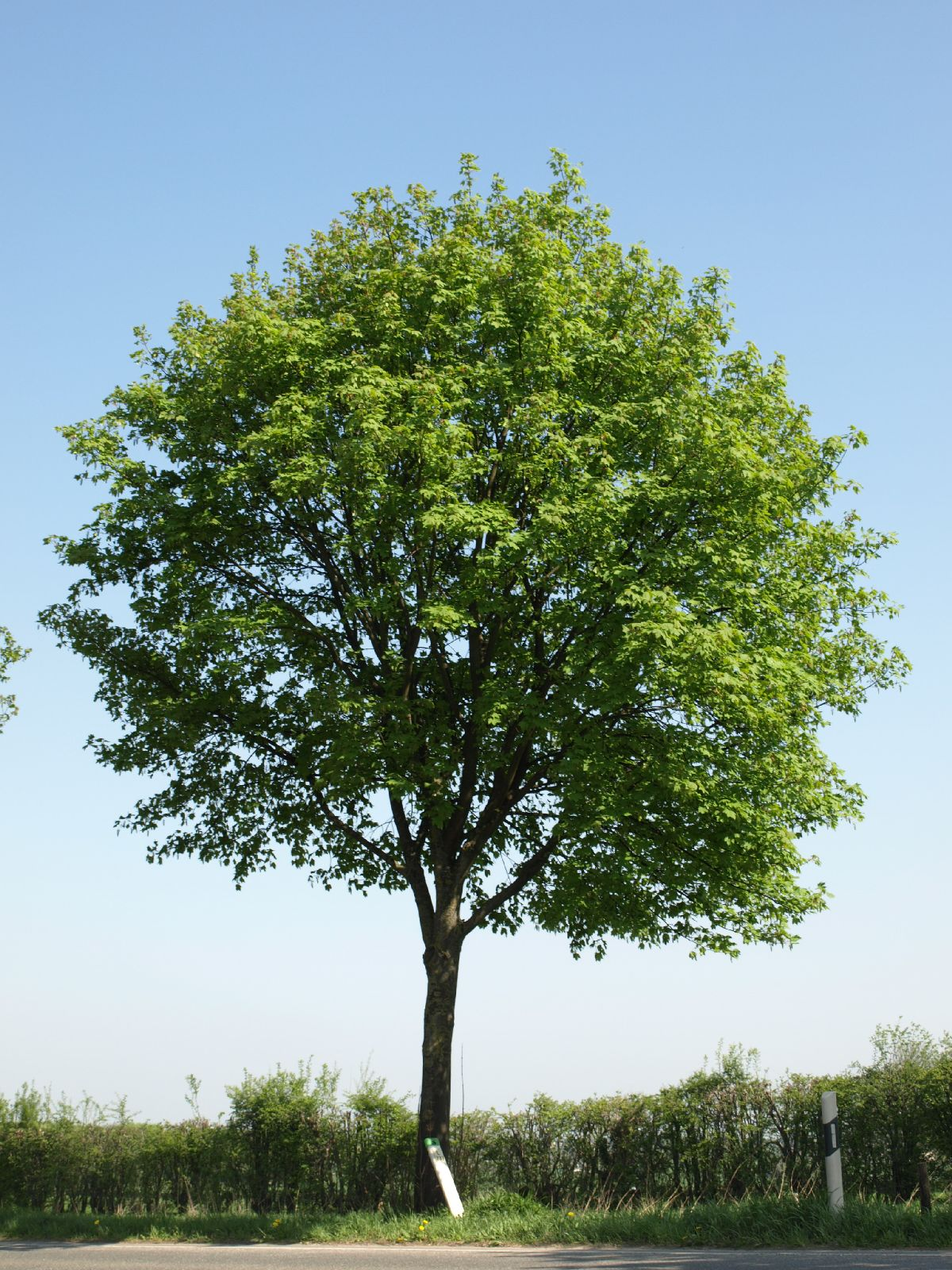 Plants-Trees_Photo_Texture_B_P4212521