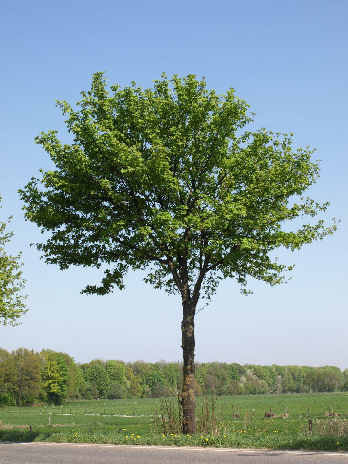 Plants-Trees_Photo_Texture_B_P4212525
