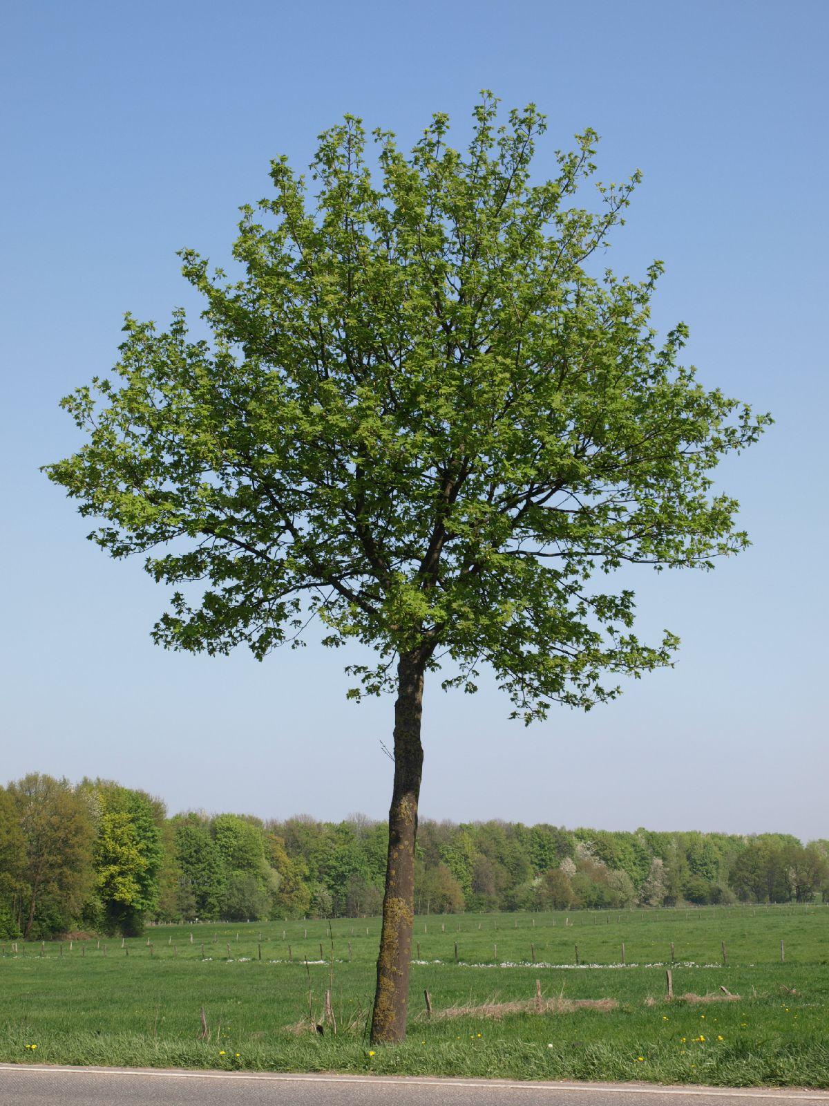 Plants-Trees_Photo_Texture_B_P4212530