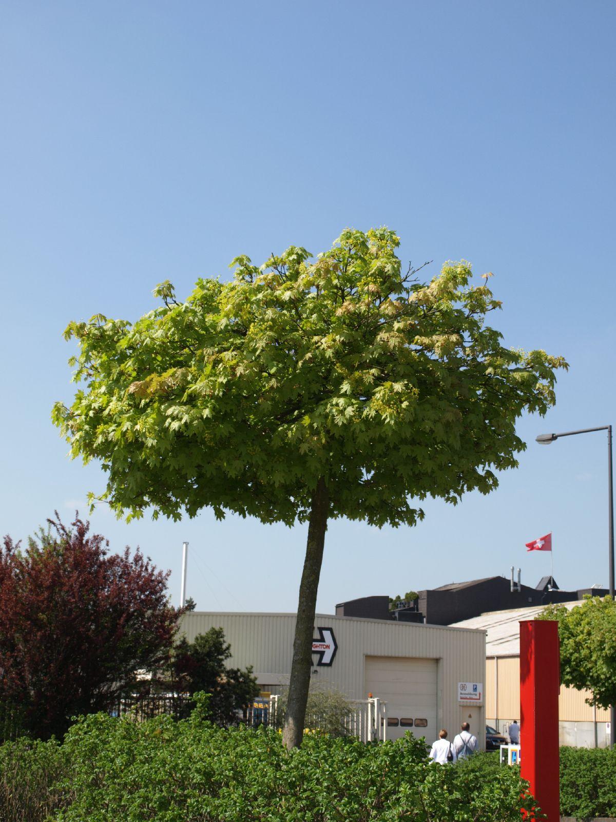 Plants-Trees_Photo_Texture_B_P4212540