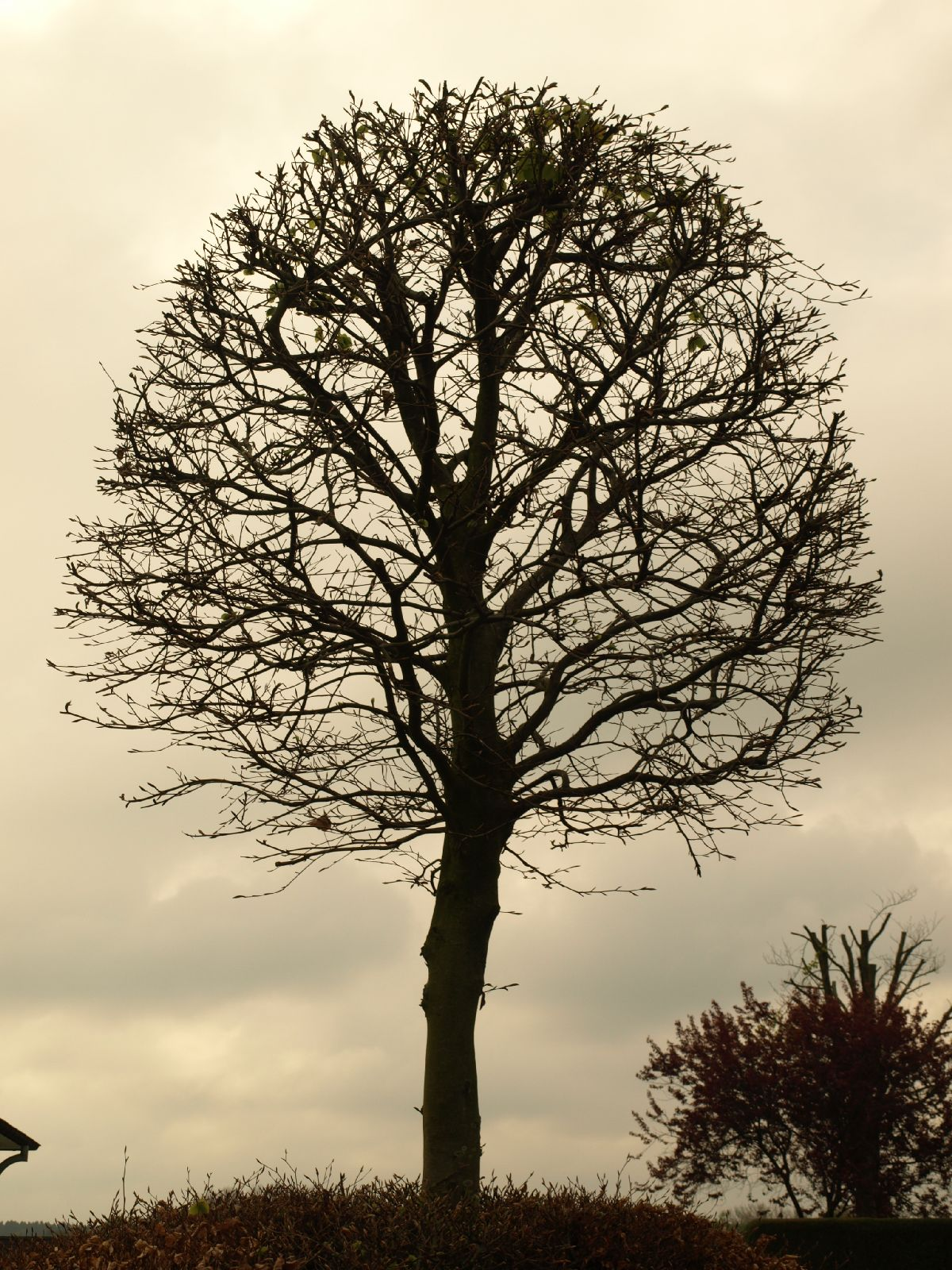 Plants-Trees_Photo_Texture_B_P4232653