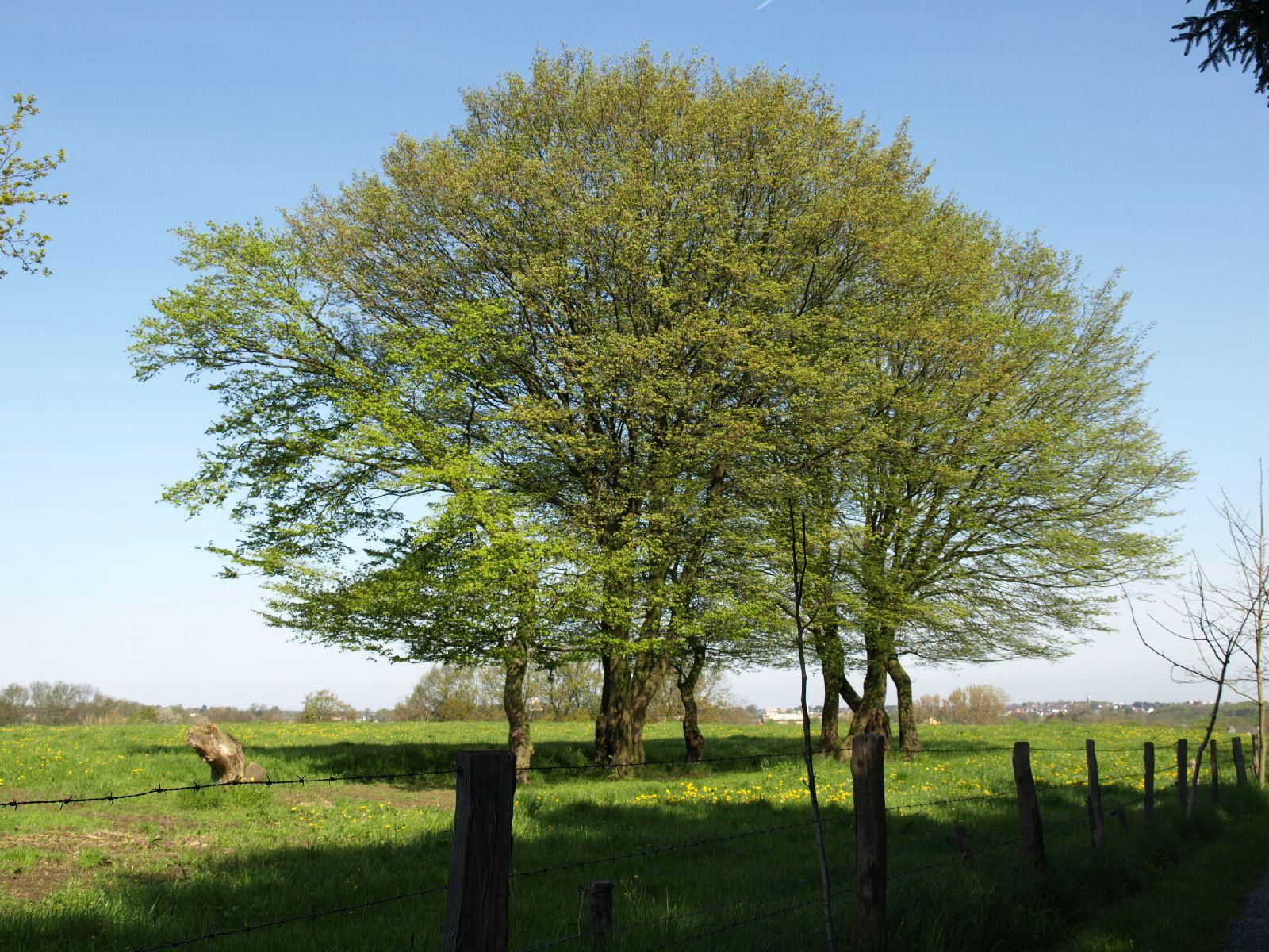 Plants-Trees_Photo_Texture_B_P5032296