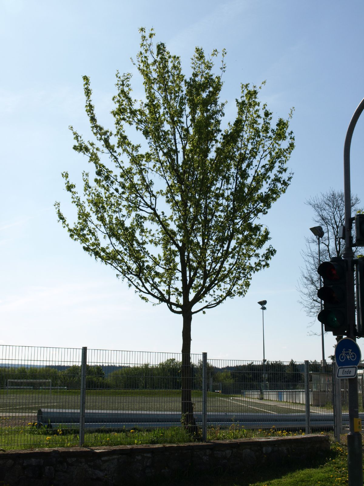Plants-Trees_Photo_Texture_B_P5032298