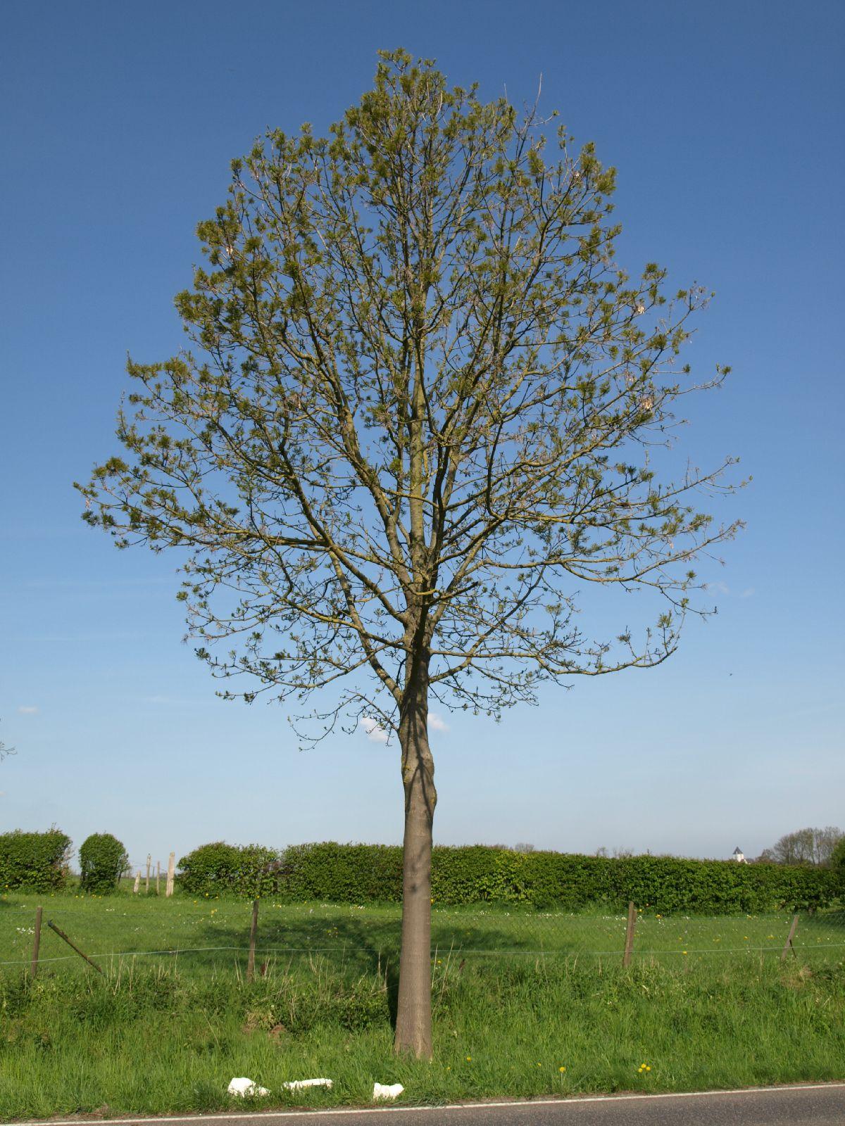 Plants-Trees_Photo_Texture_B_P5032302