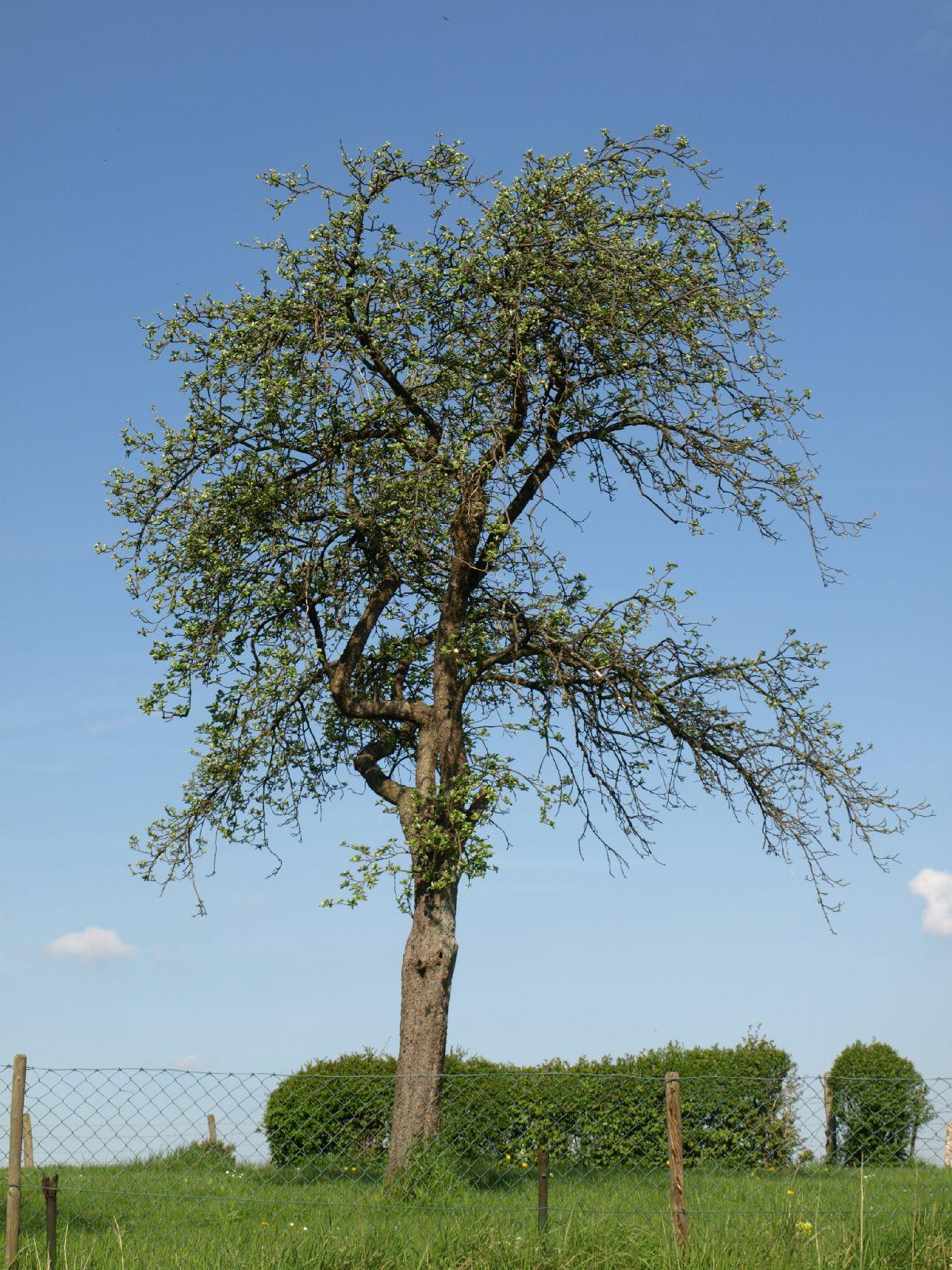 Plants-Trees_Photo_Texture_B_P5032304