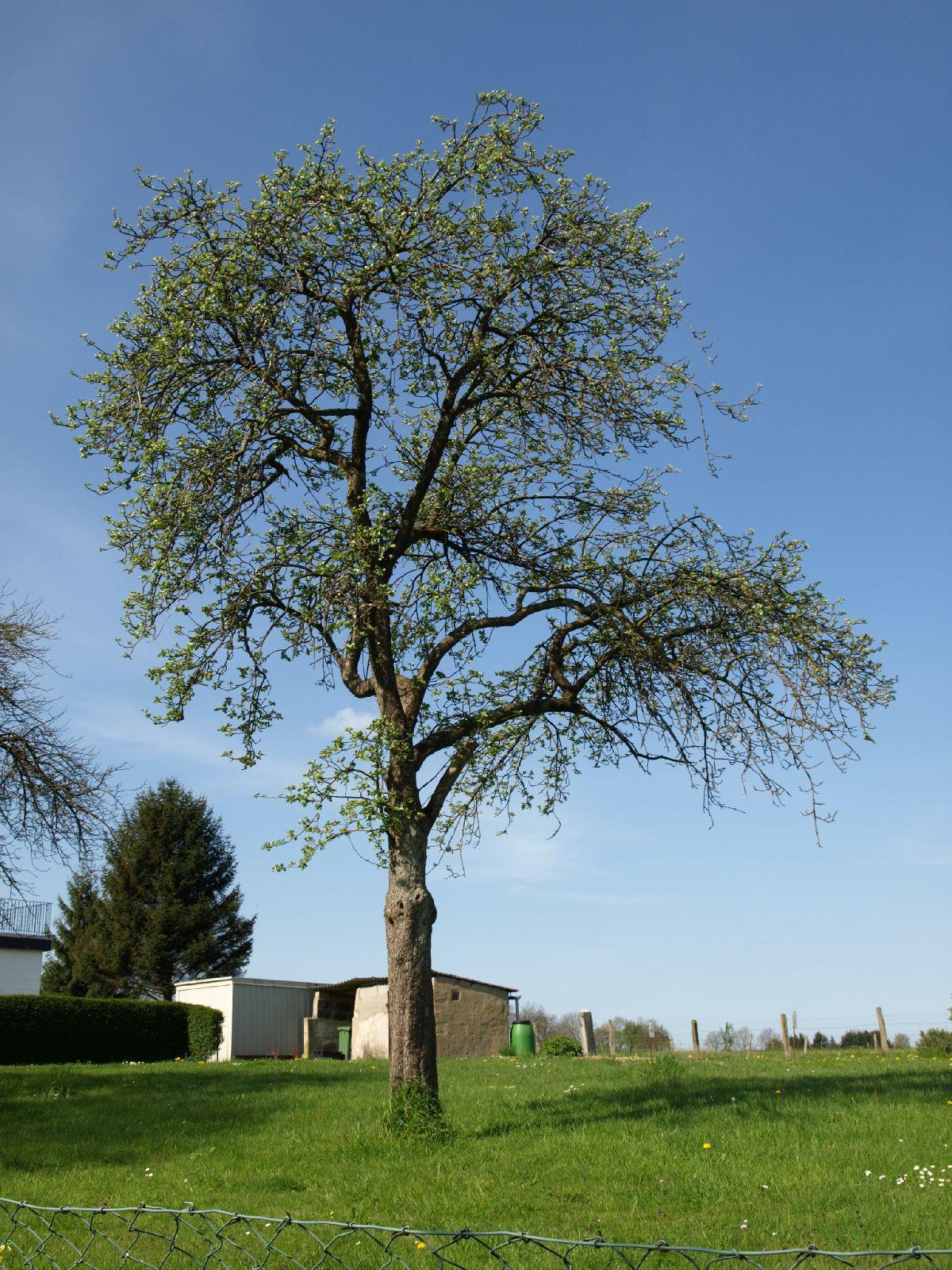 Plants-Trees_Photo_Texture_B_P5032319
