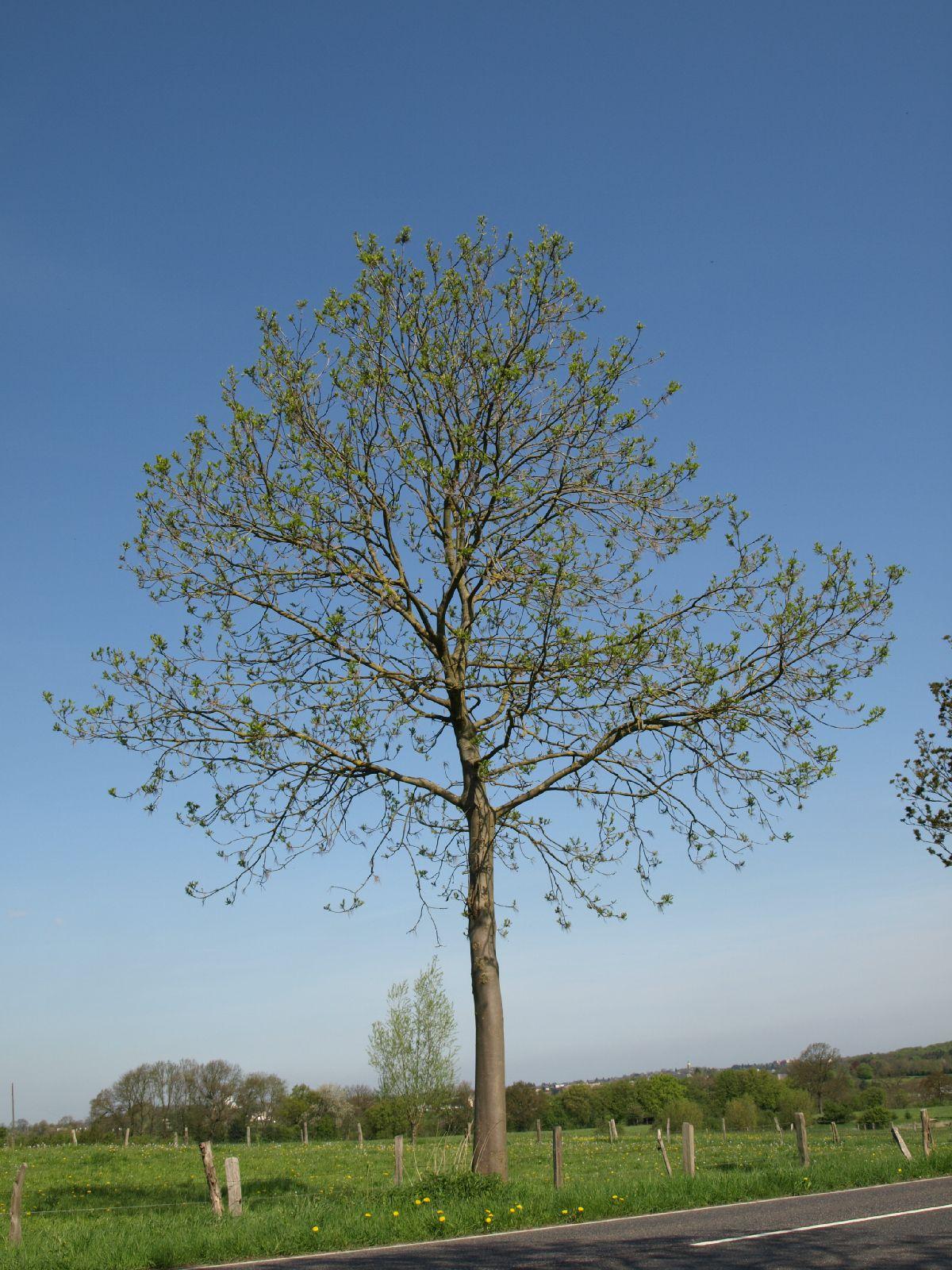 Plants-Trees_Photo_Texture_B_P5032321
