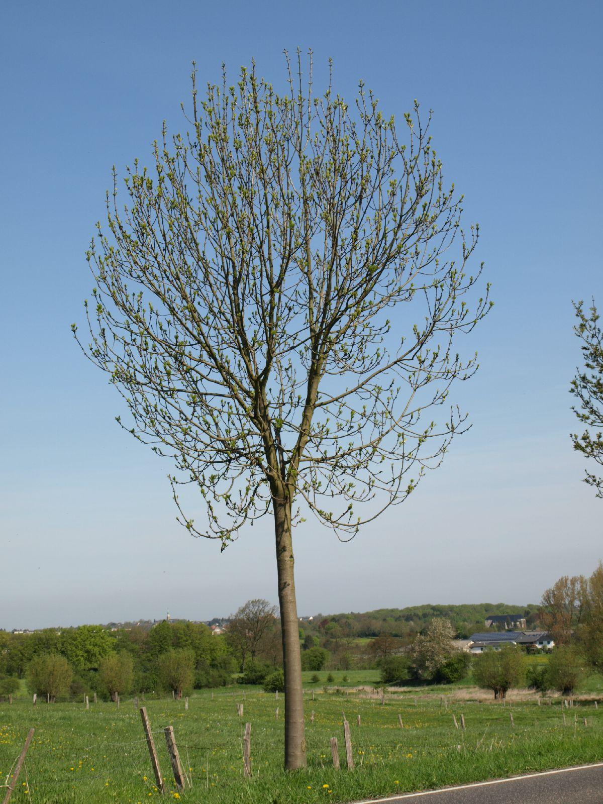 Plants-Trees_Photo_Texture_B_P5032323