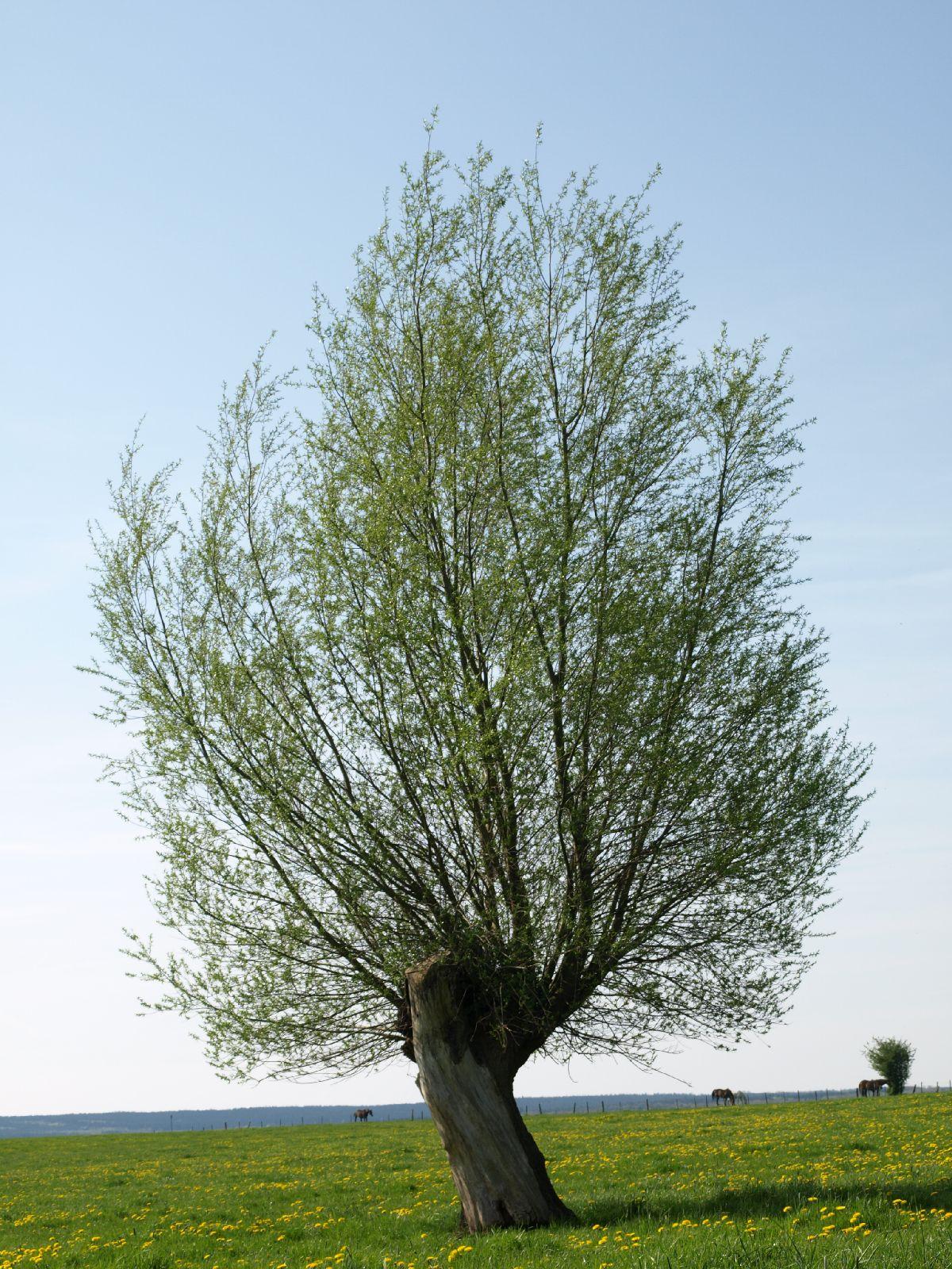 Plants-Trees_Photo_Texture_B_P5042373