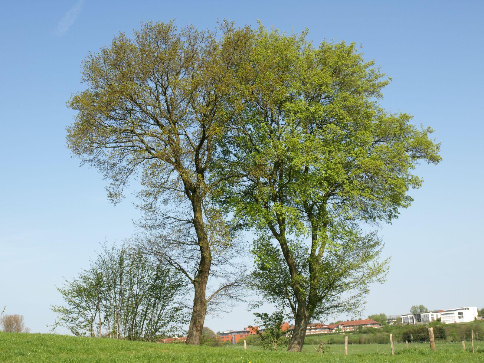 Plants-Trees_Photo_Texture_B_P5042381