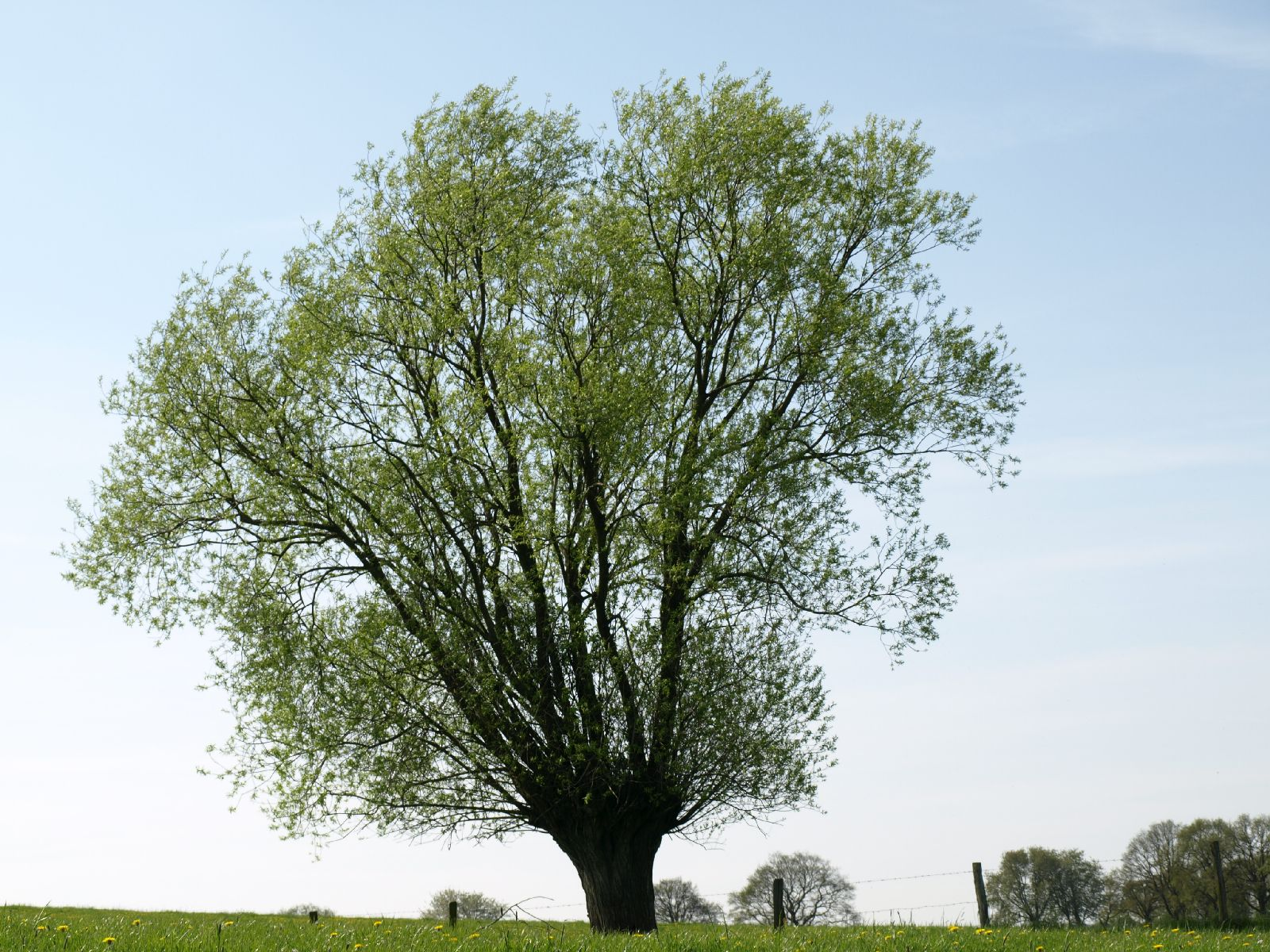 Plants-Trees_Photo_Texture_B_P5042394