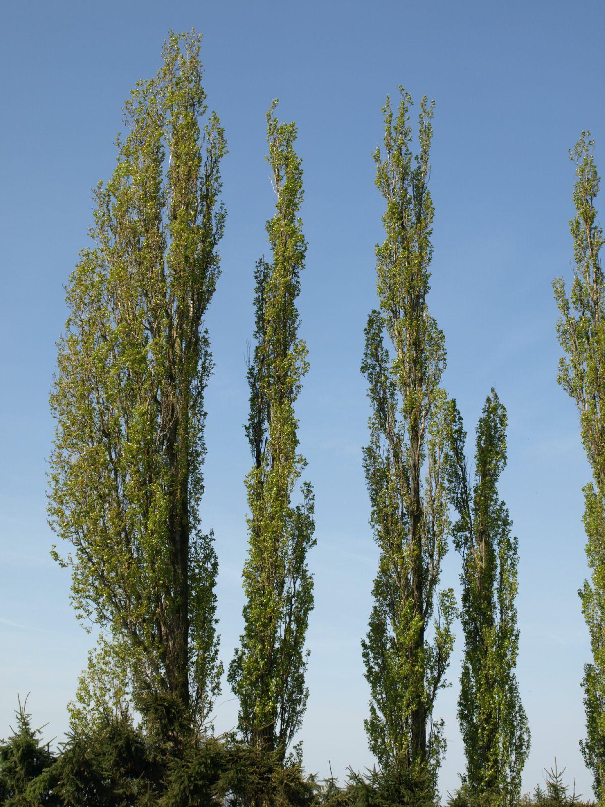 Plants-Trees_Photo_Texture_B_P5042417