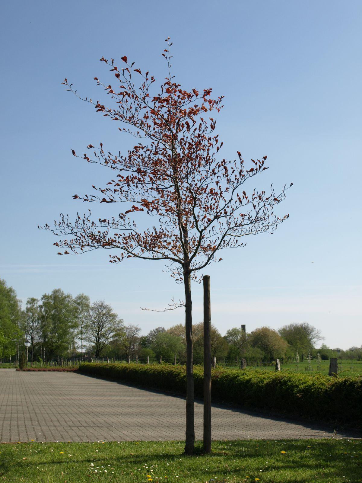 Plants-Trees_Photo_Texture_B_P5042424
