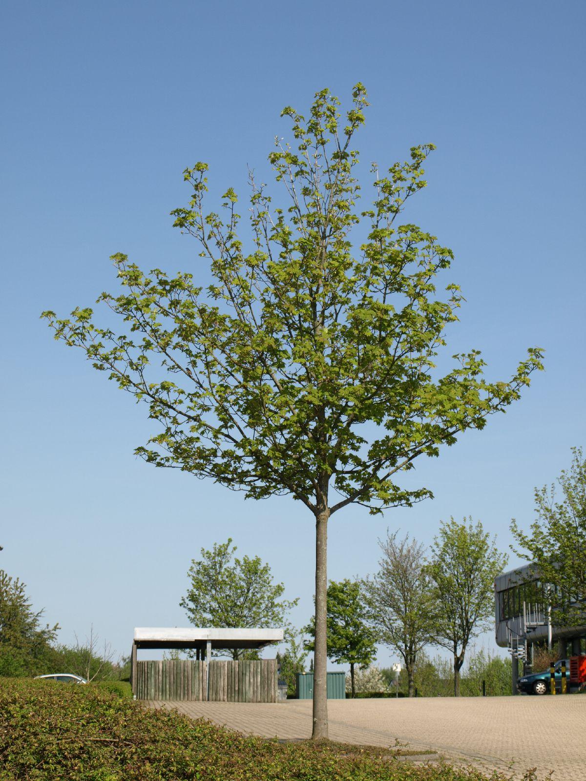 Plants-Trees_Photo_Texture_B_P5042446