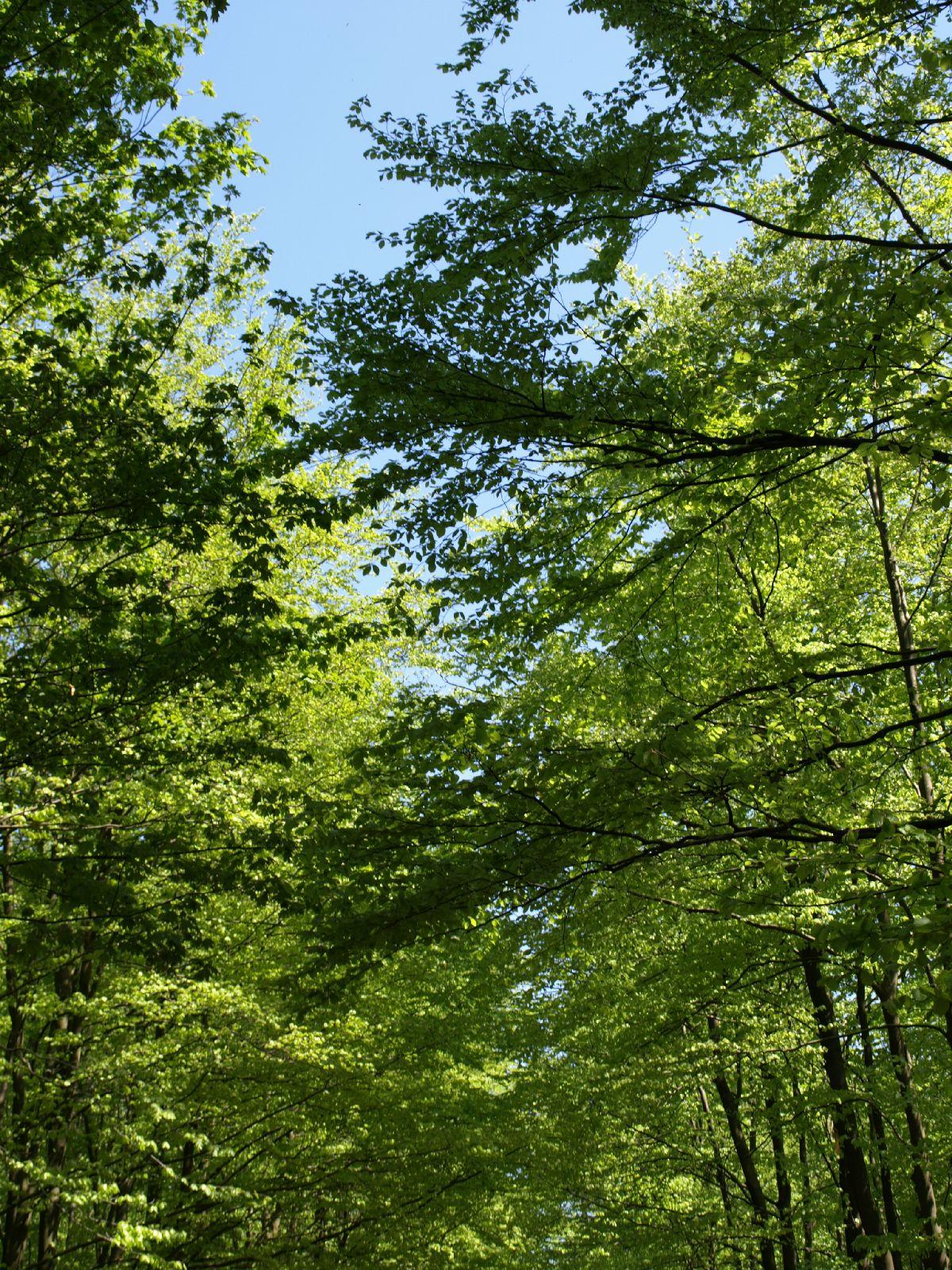 Plants-Trees_Photo_Texture_B_P5042456