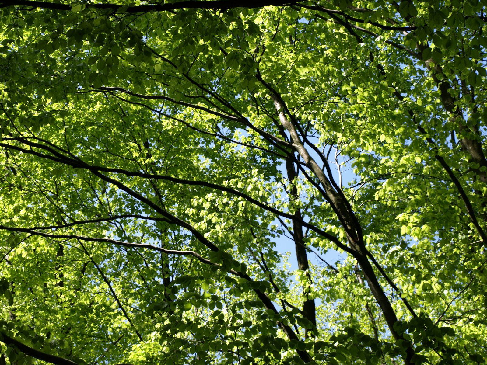 Plants-Trees_Photo_Texture_B_P5042460