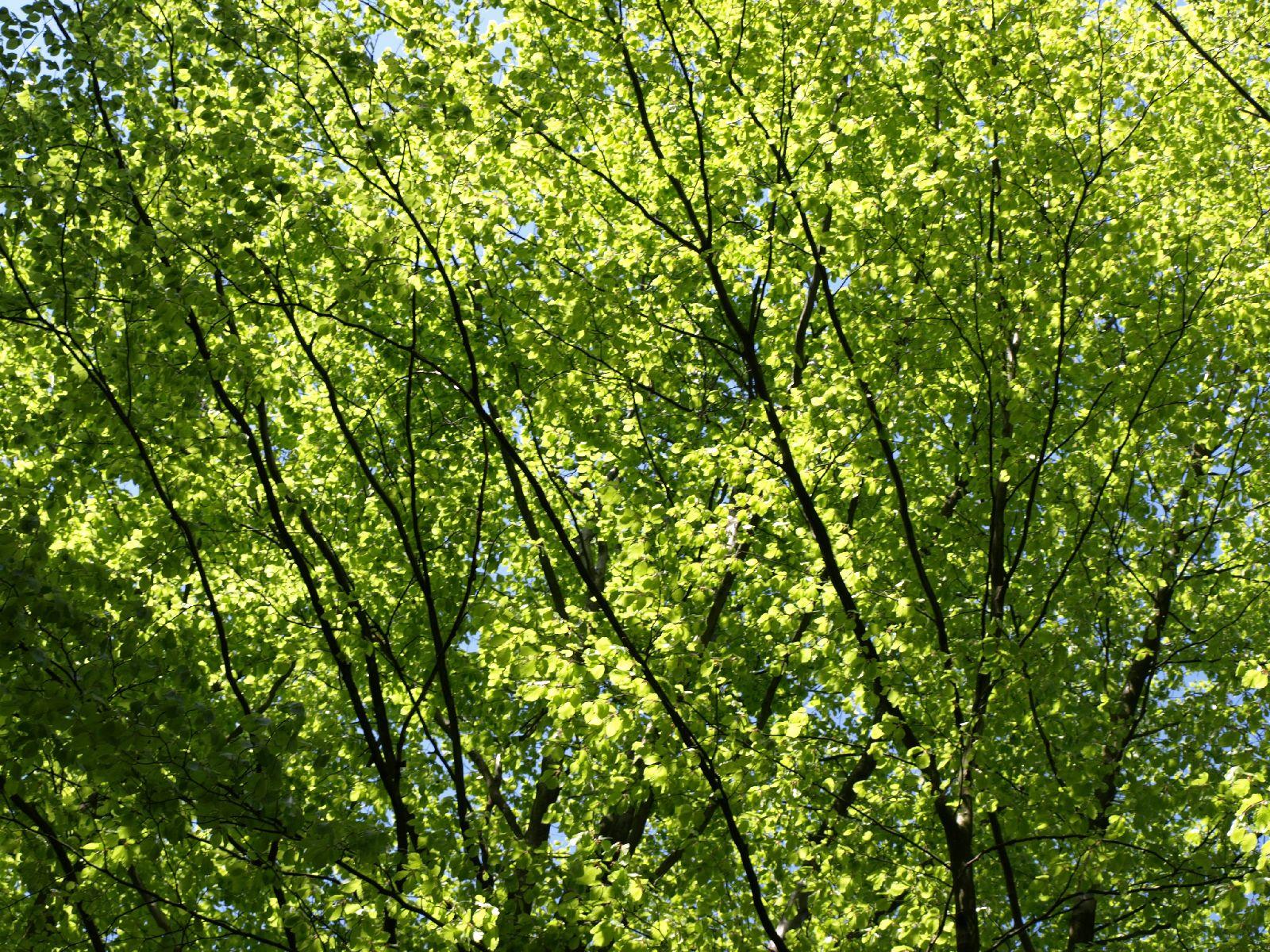 Plants-Trees_Photo_Texture_B_P5042461