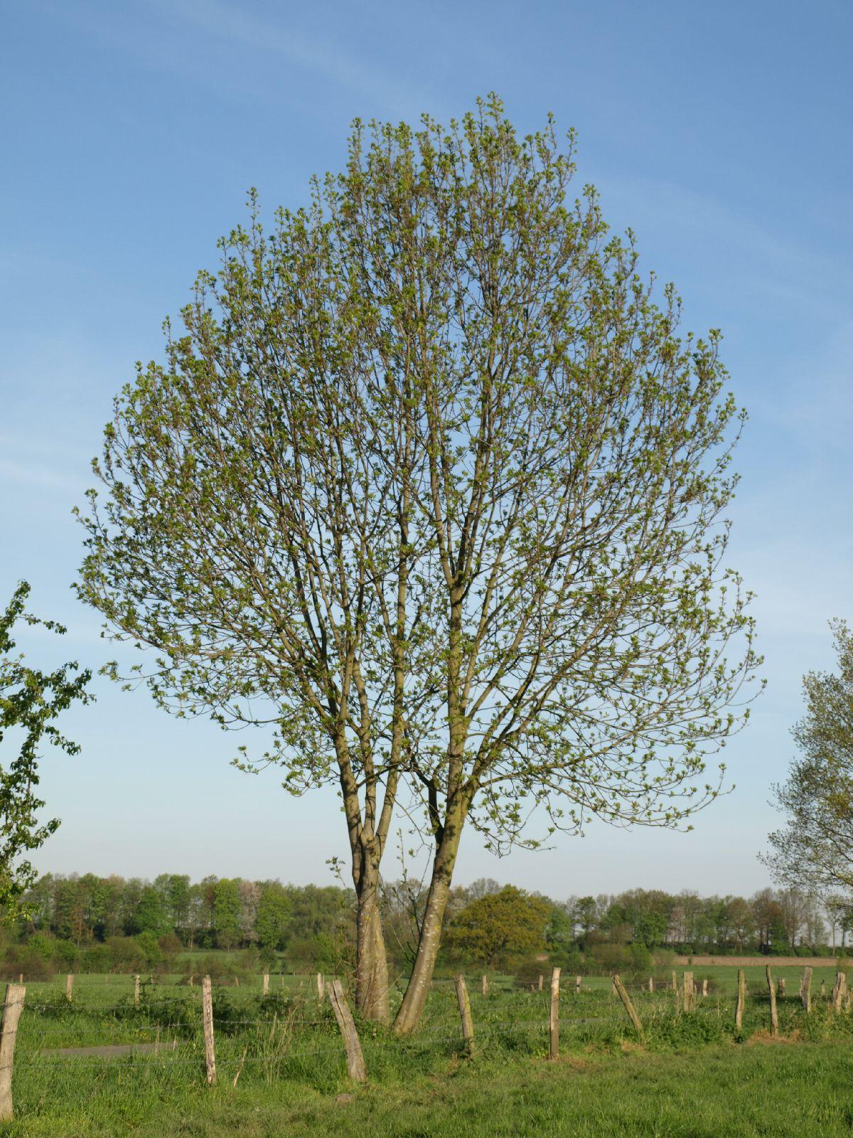 Plants-Trees_Photo_Texture_B_P5052529