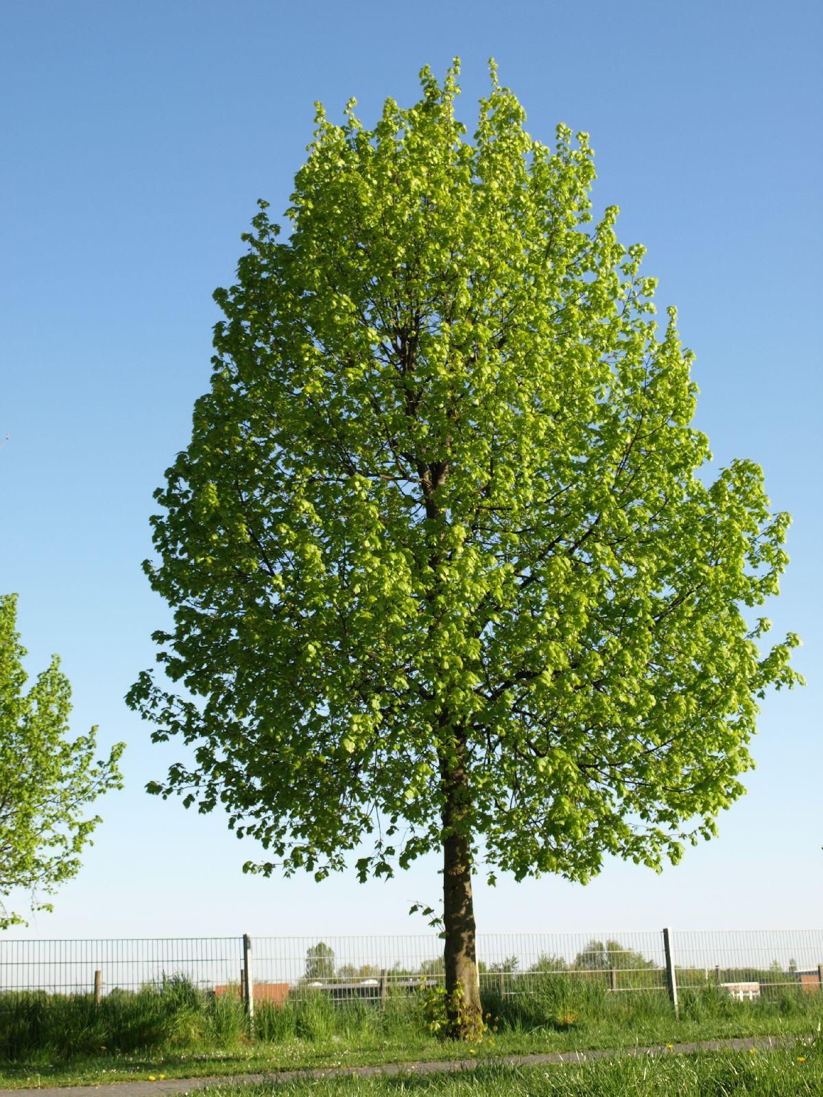 Plants-Trees_Photo_Texture_B_P5052540