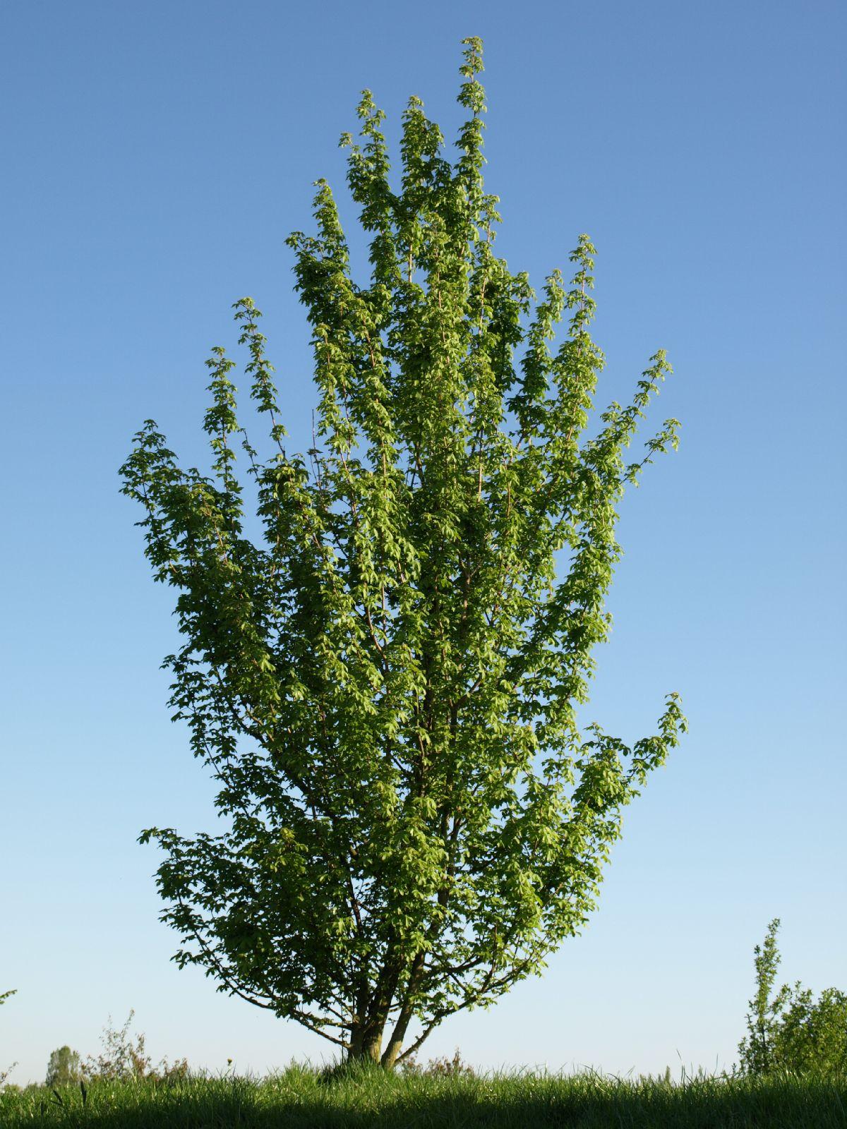 Plants-Trees_Photo_Texture_B_P5052550