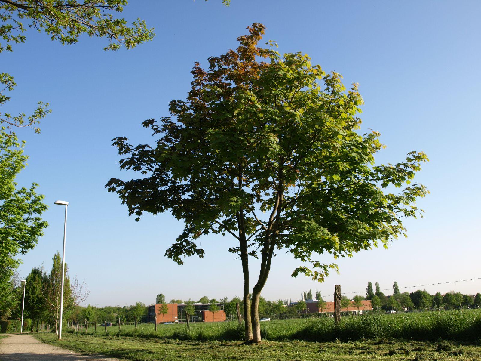 Plants-Trees_Photo_Texture_B_P5072568