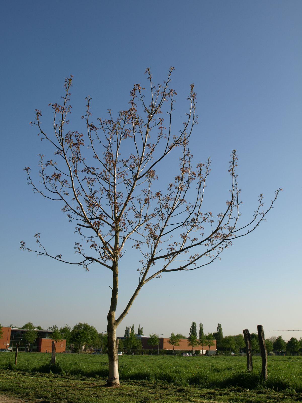 Plants-Trees_Photo_Texture_B_P5072569