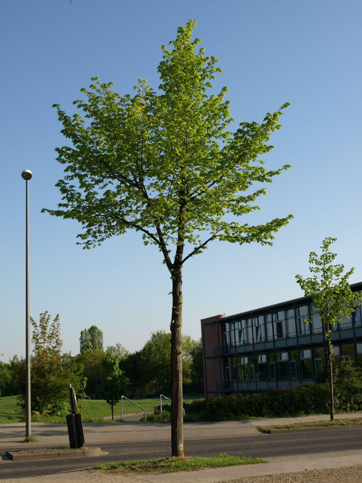 Plants-Trees_Photo_Texture_B_P5072570