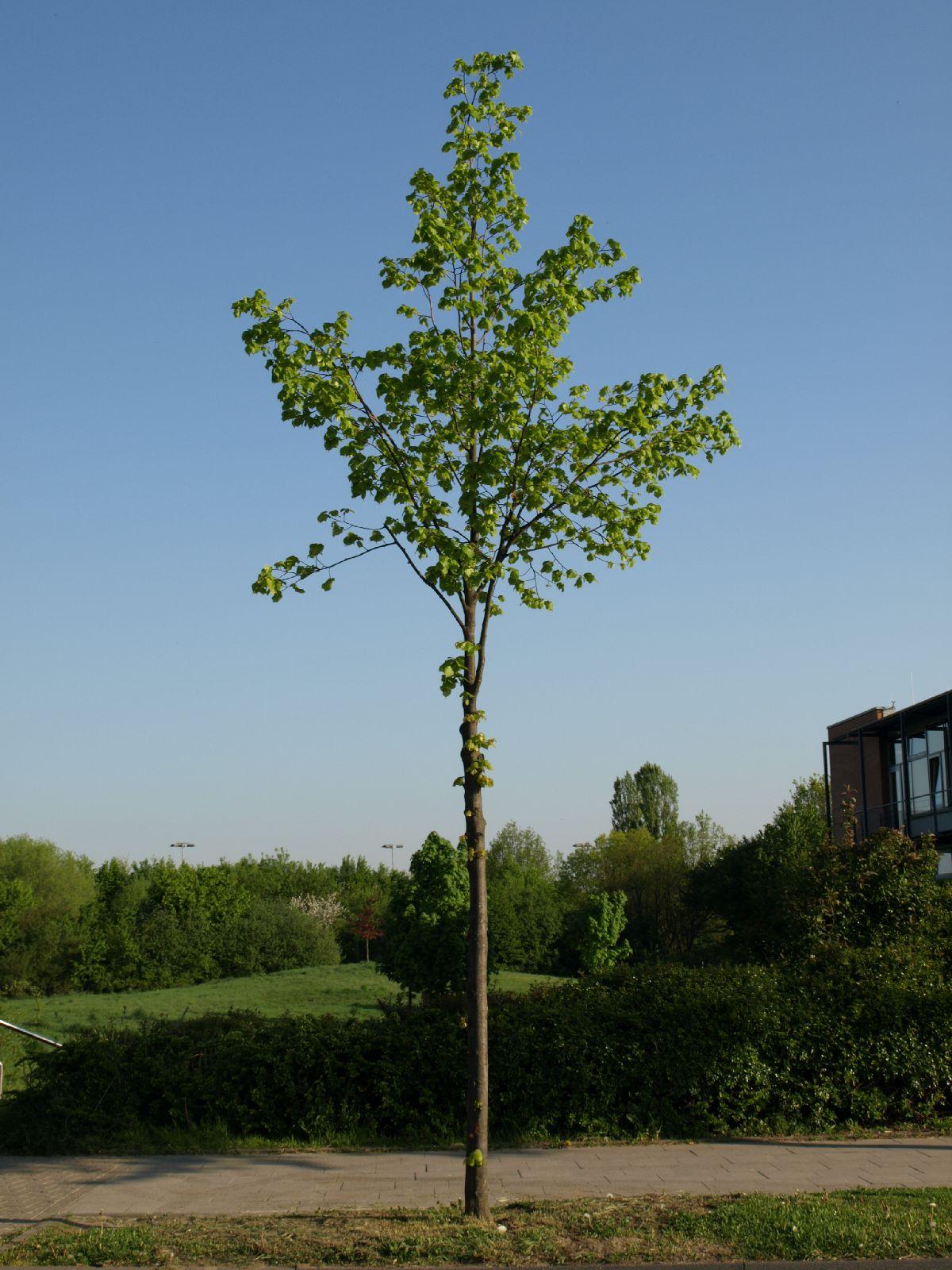 Plants-Trees_Photo_Texture_B_P5072573
