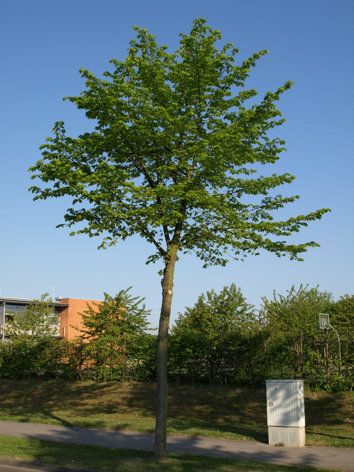 Plants-Trees_Photo_Texture_B_P5072577