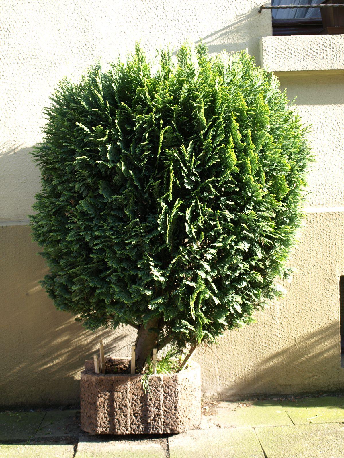 Plants-Trees_Photo_Texture_B_P5072578