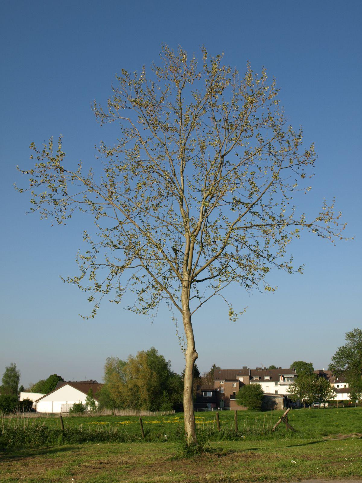 Plants-Trees_Photo_Texture_B_P5072596