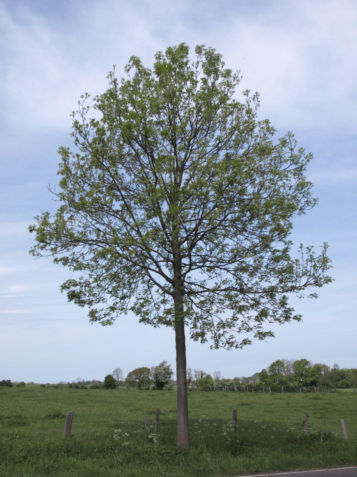 Plants-Trees_Photo_Texture_B_P5093268