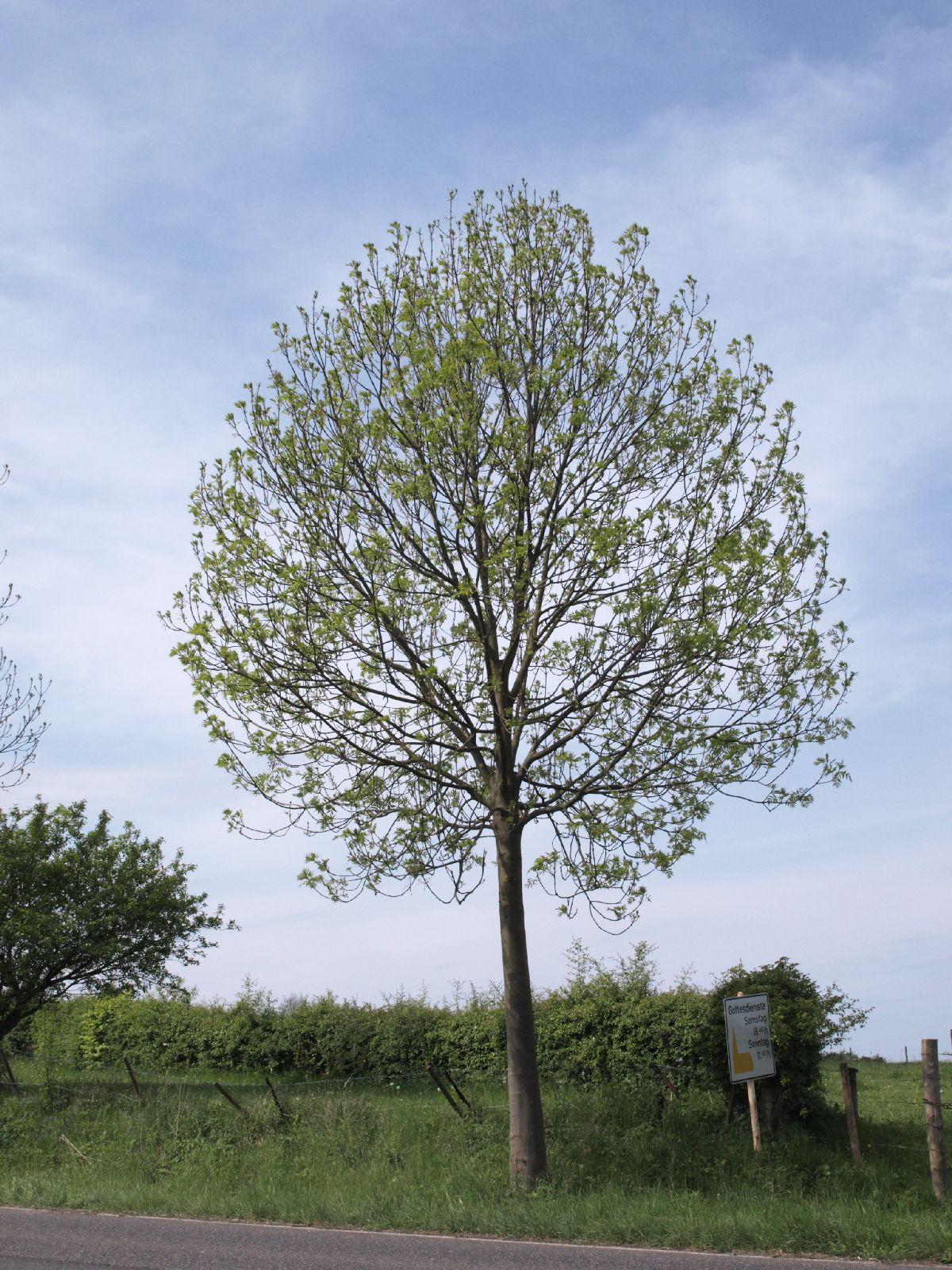 Plants-Trees_Photo_Texture_B_P5093269