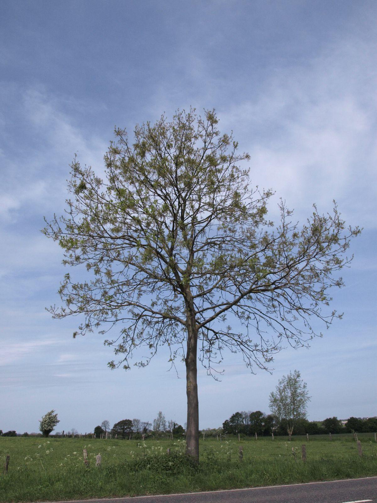 Plants-Trees_Photo_Texture_B_P5093270
