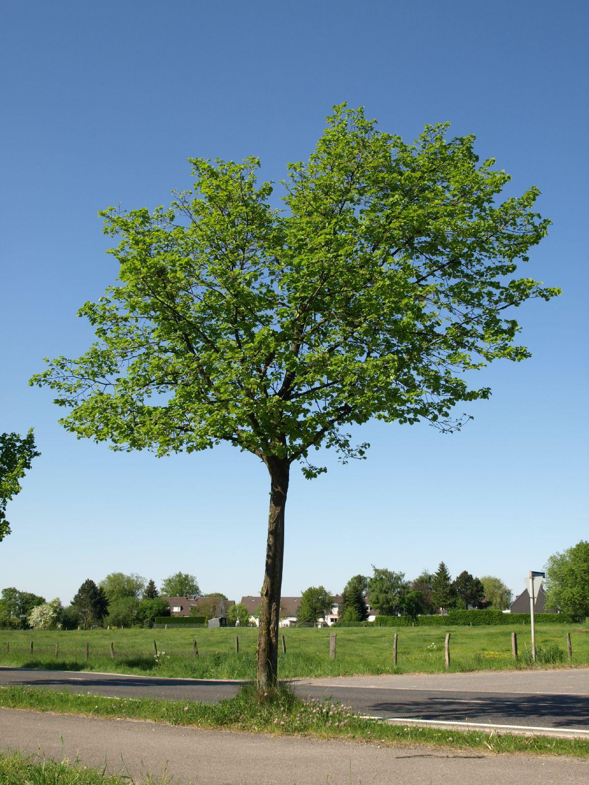 Plants-Trees_Photo_Texture_B_P5102617