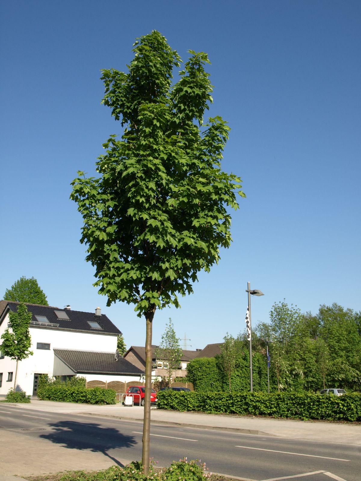 Plants-Trees_Photo_Texture_B_P5112627