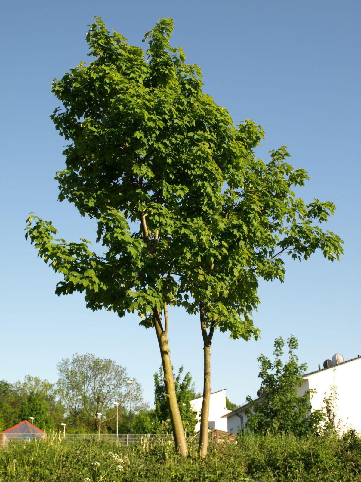 Plants-Trees_Photo_Texture_B_P5112659
