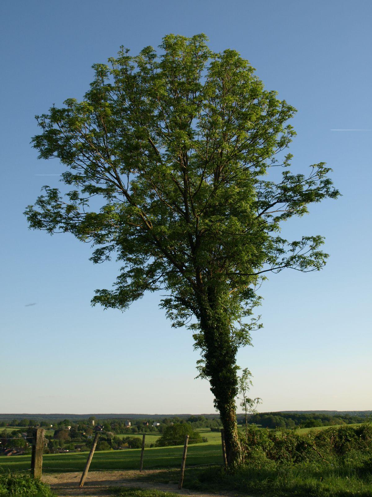 Plants-Trees_Photo_Texture_B_P5122728