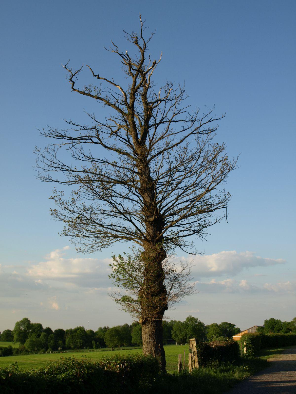 Plants-Trees_Photo_Texture_B_P5122738