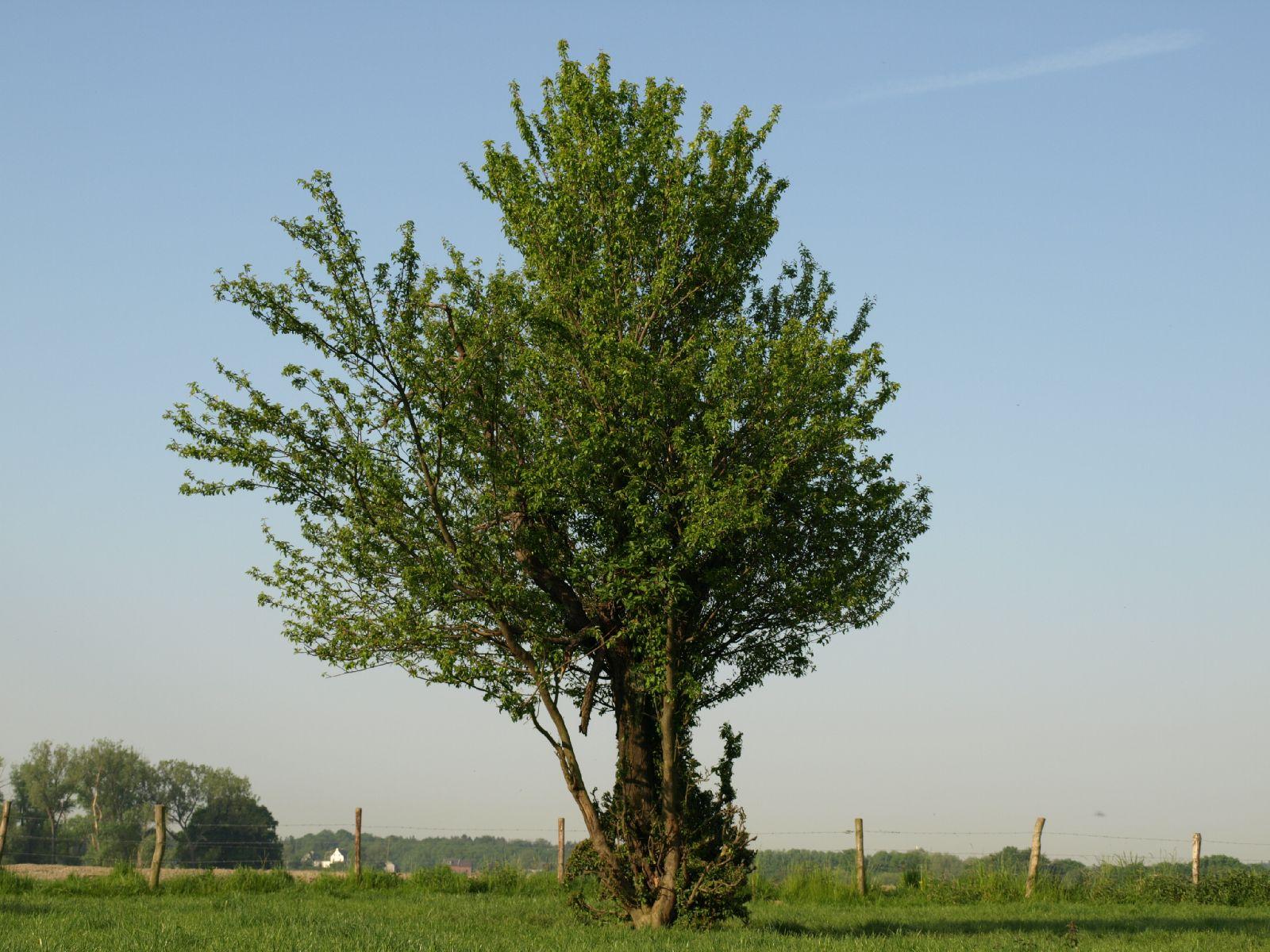 Plants-Trees_Photo_Texture_B_P5142752