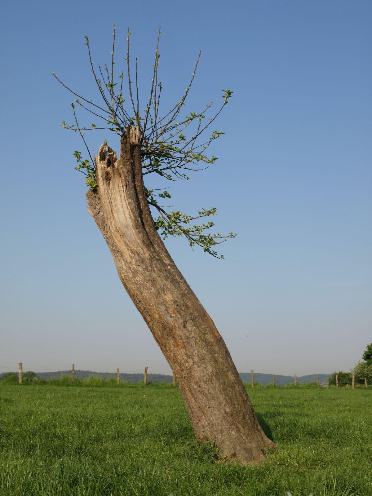 Plants-Trees_Photo_Texture_B_P5142753