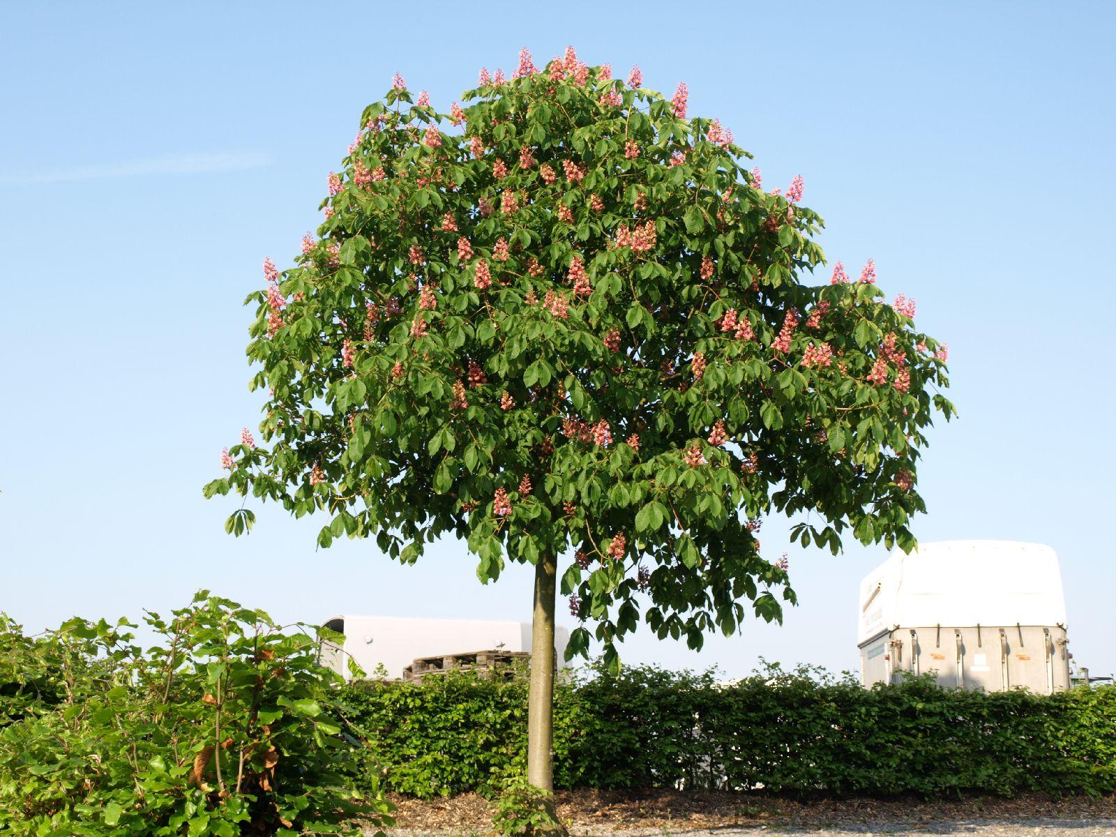 Plants-Trees_Photo_Texture_B_P5142754