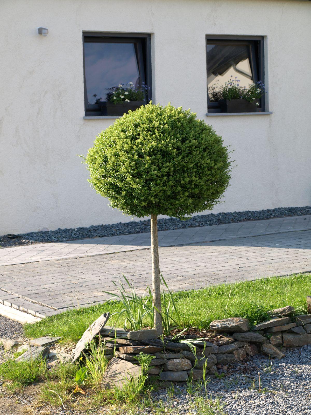 Plants-Trees_Photo_Texture_B_P5142793